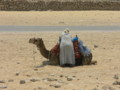 Waiting for Baqshiish from Tourists Riding Camel