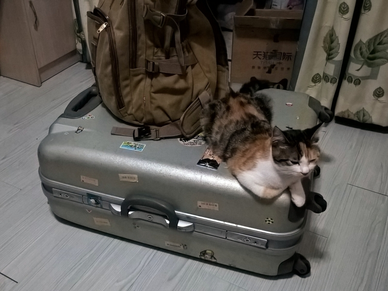 No, you're not a baggage