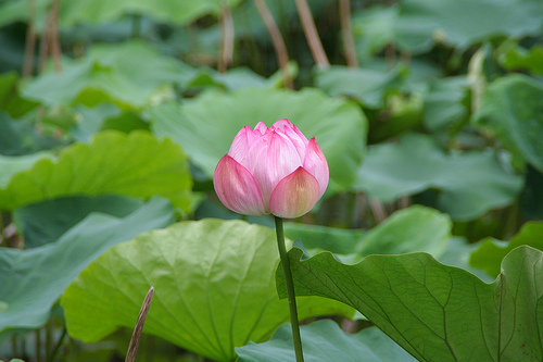 f:id:anemone_feb:20140512223809j:plain
