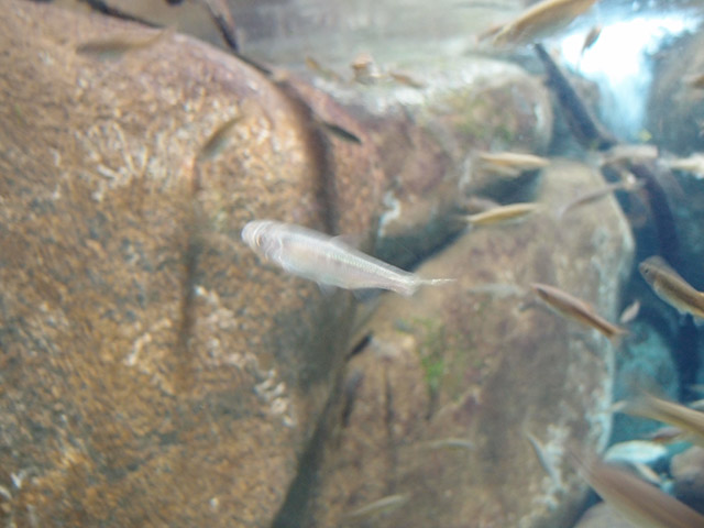f:id:aquatottotoday:20140320194631j:plain