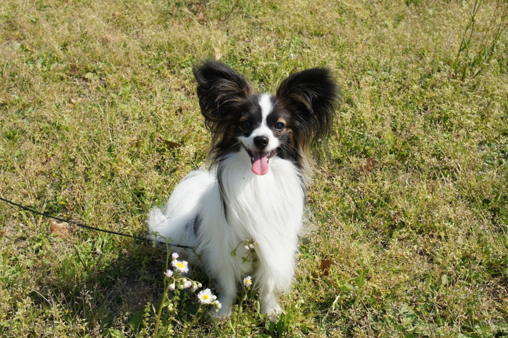 f:id:beaupapillon:20160102004718j:plain