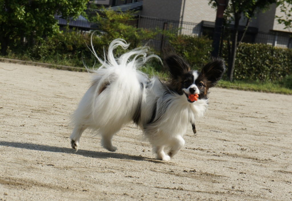 f:id:beaupapillon:20160102004737j:plain