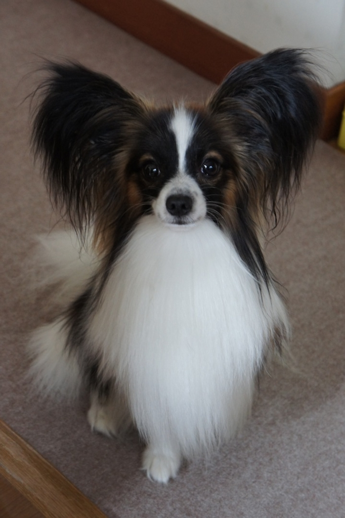 f:id:beaupapillon:20160102004752j:plain