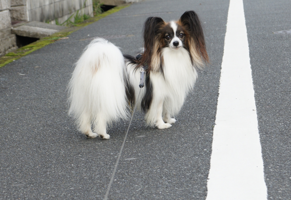 f:id:beaupapillon:20160220224315j:plain