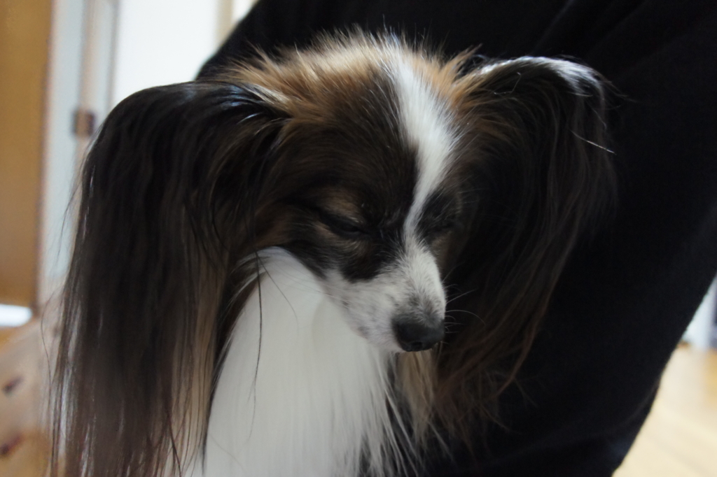 f:id:beaupapillon:20160220224351j:plain