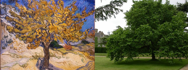 The Mulberry Tree Vincent Willem van Gogh