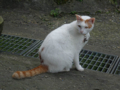 Cats of Houtong, #A138