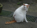 Cats of Houtong, #A139