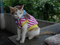 Cats of Houtong, #A155