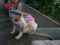 Cats of Houtong, #A156