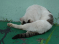 Cats of Houtong, #A209