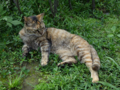 Cats of Houtong, #A216