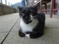Cats of Houtong, #4145