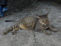 Cats of Houtong, #4181