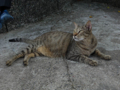 Cats of Houtong, #4182