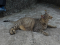 Cats of Houtong, #4183