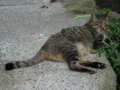 Cats of Houtong, #4226