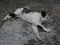 Cats of Houtong, #4228