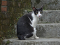 Cats of Houtong, #4243