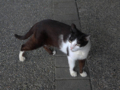 Cats of Houtong, #4261