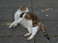 Cats of Houtong, #4295