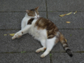 Cats of Houtong, #4296