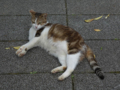 Cats of Houtong, #4297