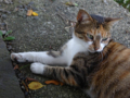 Cats of Houtong, #4395