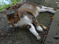 Cats of Houtong, #4399
