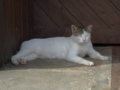 Cats of Houtong, #4455