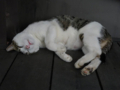 Cats of Houtong, #4466