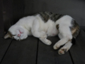 Cats of Houtong, #4467