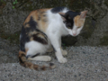 Cats of Houtong, #4513