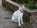 Cats of Houtong, #4606