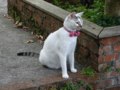 Cats of Houtong, #4607