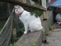 Cats of Houtong, #4609