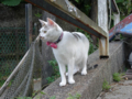 Cats of Houtong, #4610