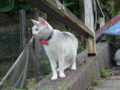 Cats of Houtong, #4611