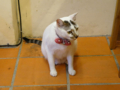 Cats of Houtong, #4623