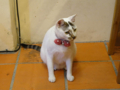 Cats of Houtong, #4624