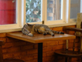 Cats of Cat's Buddy Cafe, #4697