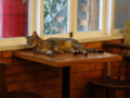 Cats of Cat's Buddy Cafe, #4698