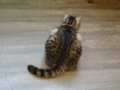 Cats of Cat's Buddy Cafe, #4718