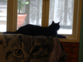 Cats of Cat's Buddy Cafe, #4719