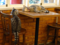 Cats of Cat's Buddy Cafe, #4722