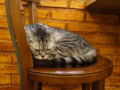 Cats of Cat's Buddy Cafe, #4729