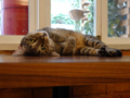 Cats of Cat's Buddy Cafe, #4730
