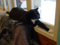 Cats of Cat's Buddy Cafe, #4732