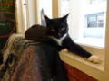 Cats of Cat's Buddy Cafe, #4733