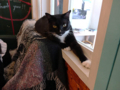 Cats of Cat's Buddy Cafe, #4734